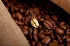 καφές φασολιών που τηγανί& Στοκ Φωτογραφίες