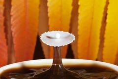 Καφές φθινοπώρου με τον παφλασμό του γάλακτος Στοκ Φωτογραφία