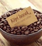 Καφές Kopi luwak Στοκ φωτογραφία με δικαίωμα ελεύθερης χρήσης