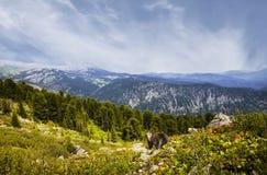Καφετής αντέξτε στα βουνά, στοκ φωτογραφίες με δικαίωμα ελεύθερης χρήσης