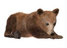 Καφετής αντέξτε cub Στοκ εικόνα με δικαίωμα ελεύθερης χρήσης