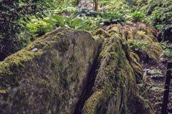 Καφετής δασικός βράχος βρύου και κάποια φτέρη Στοκ Εικόνες