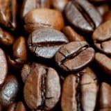 καφετής καφές φασολιών Στοκ Εικόνα