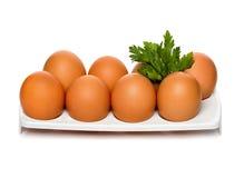 καφετής μαϊντανός αυγών εμ&pi στοκ φωτογραφίες με δικαίωμα ελεύθερης χρήσης