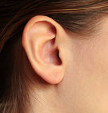 Καφετής-μαλλιαρές γυναίκες κοριτσιών ` s αυτιών Στοκ φωτογραφίες με δικαίωμα ελεύθερης χρήσης