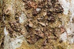 Καφετής φλοιός ενός δέντρου στοκ φωτογραφίες