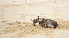 Καφετής ύπνος σκυλιών στην παραλία Στοκ φωτογραφίες με δικαίωμα ελεύθερης χρήσης