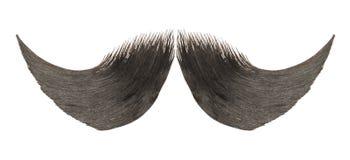 Καφετής mustache στοκ εικόνες