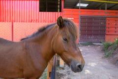 Καφετί άλογο στο πορτοκαλί αγρόκτημα στοκ φωτογραφίες με δικαίωμα ελεύθερης χρήσης