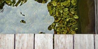 καφετί δάσος σύστασης σκιών ανασκόπησης στοκ εικόνες