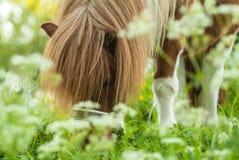 Καφετί άσπρο με πόδια άλογο την άνοιξη Στοκ εικόνα με δικαίωμα ελεύθερης χρήσης