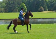 Καφετί άλογο που οδηγιέται από το άτομο που φορά το κοστούμι Elizabethan με το ξίφος Στοκ Φωτογραφίες