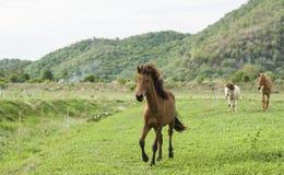 Καφετί άλογο που τρέχει στον πράσινο τομέα Στοκ φωτογραφία με δικαίωμα ελεύθερης χρήσης
