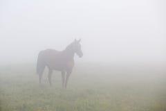 Καφετί άλογο στην ομίχλη πρωινού στοκ φωτογραφία