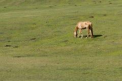 Καφετί άλογο στο πράσινο πεδίο Στοκ φωτογραφία με δικαίωμα ελεύθερης χρήσης