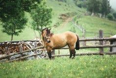 Καφετί άλογο στο χωριό Στοκ φωτογραφίες με δικαίωμα ελεύθερης χρήσης
