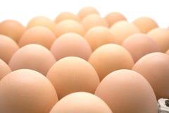 Καφετί αυγό κοτόπουλου Στοκ Εικόνα
