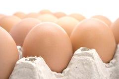 Καφετί αυγό κοτόπουλου Στοκ Φωτογραφίες