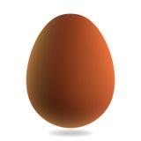 Καφετί αυγό Στοκ Εικόνα
