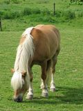 καφετί βαρύ άλογο Στοκ φωτογραφία με δικαίωμα ελεύθερης χρήσης