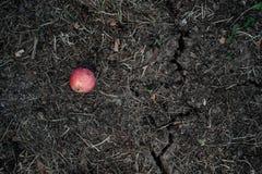 Καφετί γήινα ράγισμα και μήλο στοκ εικόνες