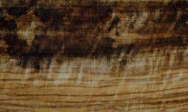 καφετί δάσος σύστασης σκιών ανασκόπησης στοκ εικόνα
