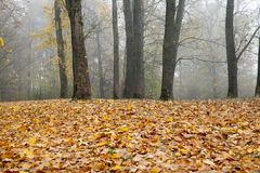 Καφετί δάσος φθινοπώρου στοκ φωτογραφία με δικαίωμα ελεύθερης χρήσης