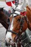 καφετί επικεφαλής άλογ&omic Στοκ Εικόνα