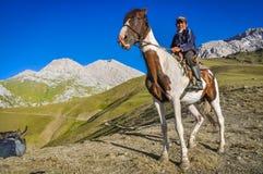 Καφετί και άσπρο επισημασμένο άλογο στο Κιργιστάν Στοκ εικόνα με δικαίωμα ελεύθερης χρήσης