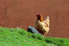 Καφετί και χρυσό κοτόπουλο Στοκ φωτογραφία με δικαίωμα ελεύθερης χρήσης