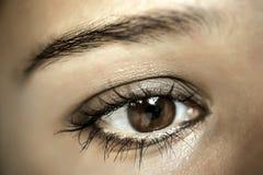 Καφετί μάτι Makeup Όμορφη σύνθεση ματιών Μακροεντολή Στοκ Εικόνες