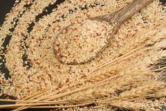 Καφετί οργανικό ρύζι στο ξύλινο κουτάλι Στοκ Εικόνες
