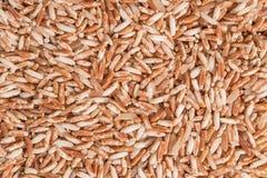 Καφετί οργανικό ρύζι Sangyod Στοκ Φωτογραφία