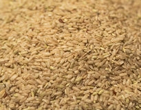 Καφετί ρύζι Στοκ εικόνες με δικαίωμα ελεύθερης χρήσης