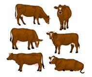 Καφετί σύνολο βοοειδών Στοκ εικόνες με δικαίωμα ελεύθερης χρήσης
