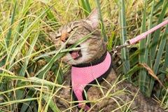 Καφετί τιγρέ μάσημα γατών σε ένα φύλλο φυτών yucca Στοκ εικόνες με δικαίωμα ελεύθερης χρήσης