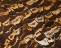 Καφετί υπόβαθρο φτερών Αφηρημένη οριζόντια σύσταση Στοκ Εικόνες