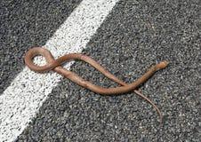 Καφετί φίδι Στοκ εικόνα με δικαίωμα ελεύθερης χρήσης