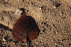 καφετί φύλλο αμμώδες Στοκ φωτογραφίες με δικαίωμα ελεύθερης χρήσης