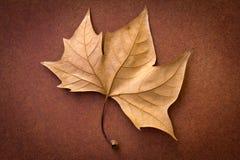 καφετί φύλλο στοκ φωτογραφία