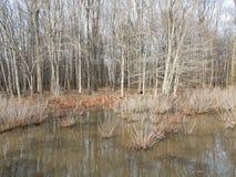 Καφετί χλόες και νερό και δέντρα στην περιοχή υγρότοπου στοκ φωτογραφία με δικαίωμα ελεύθερης χρήσης