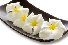 καφετί flower spa λευκό κύπελλων Στοκ φωτογραφία με δικαίωμα ελεύθερης χρήσης