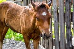 Καφετί foal σε ένα υπόβαθρο της φύσης στοκ εικόνες