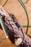 Καφετί gecko Στοκ Εικόνες