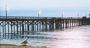 Καφετί seagull μπροστά από την αποβάθρα σε νότια Καλιφόρνια στοκ εικόνες με δικαίωμα ελεύθερης χρήσης