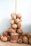 Καφετιά δέσμη καρύδων κατά την κάθετη άποψη Στοκ Φωτογραφία