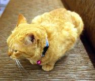 καφετιά αγάπη απεικόνισης καρδιών γατών Στοκ Εικόνες