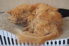 καφετιά αγάπη απεικόνισης καρδιών γατών Στοκ Εικόνα