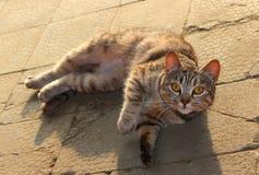 καφετιά αγάπη απεικόνισης καρδιών γατών Στοκ φωτογραφία με δικαίωμα ελεύθερης χρήσης