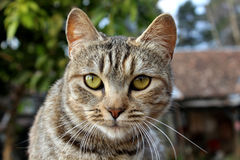 καφετιά αγάπη απεικόνισης καρδιών γατών Στοκ Φωτογραφίες